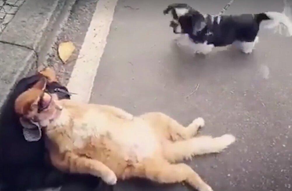 VIDEO   Jalustrabav reaktsioon: mida sa ikka igaühe peale oma närve raiskad