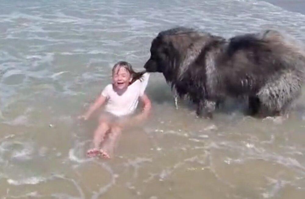 IMEARMAS VIDEO | Koer tirib lainetes möllava lapse kaldale, kuna arvab, et tüdruk on uppumas