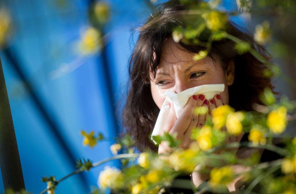 Ettevaatust allergikud: õietolmunäitajad õhus on keskmisest kõrgemad