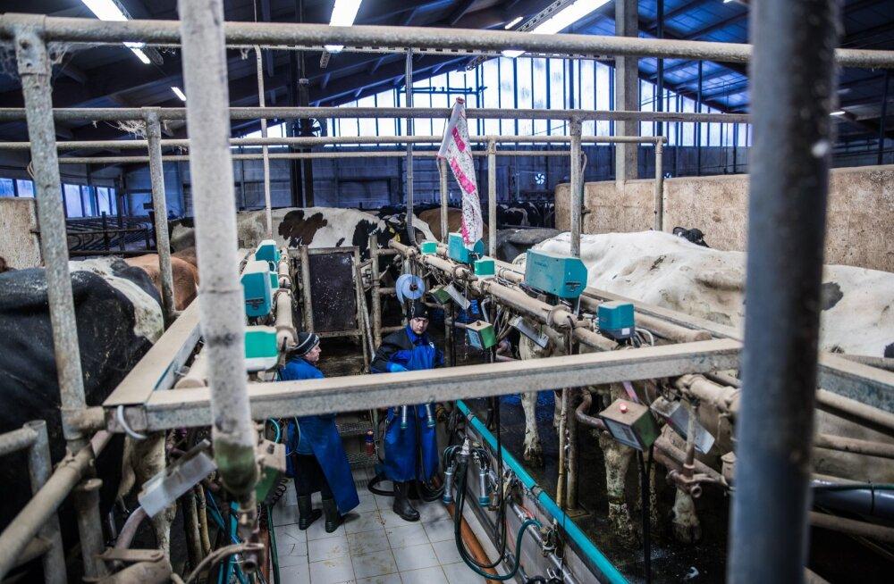 Ukrainlased on teinud Kaska-Luiga talus tublit tööd juba mitu aastat. Kui nende tööluba lõpeb, siis nad tööd teha enam ei tohi, kuid suletud piiride tõttu Eestist kodumaale ka ei pääse