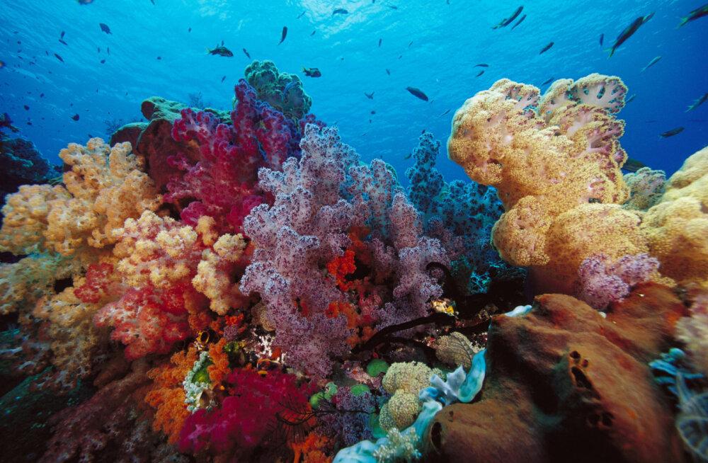 Как слепой и больной Робинзон Крузо спасает коралловый риф