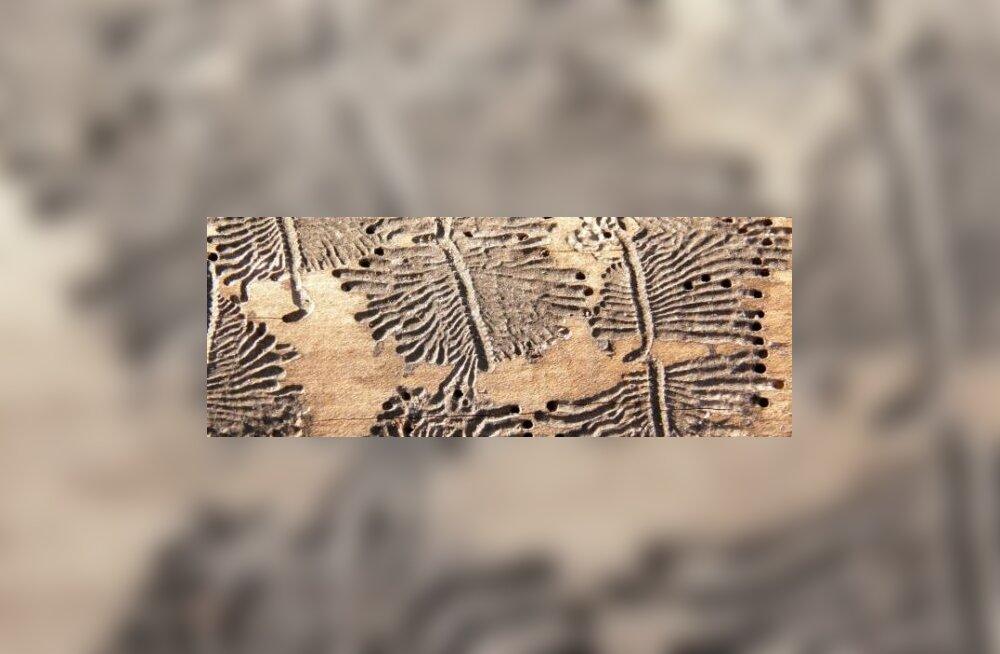 Peruu stiilis puulõige. Autoriks ürask.