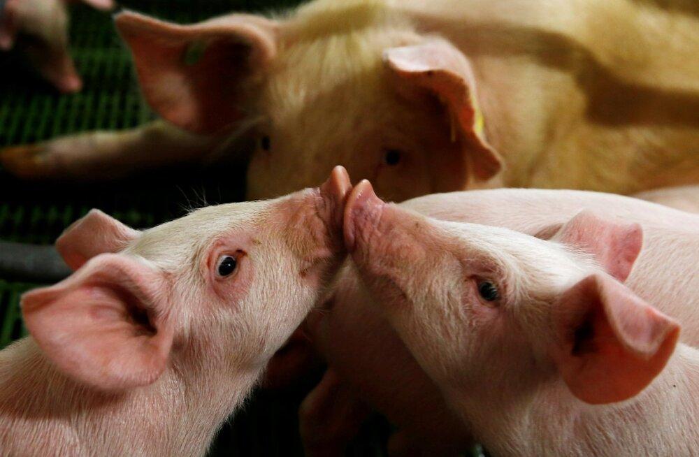 Kui varem olid suured pealkirjad loomade halvast kohtlemisest, siis nüüd on suured pealkirjad hoopis sellest, millised on skandaalid seoses importlihaga – salmonella, antibiootikumide jäägid.