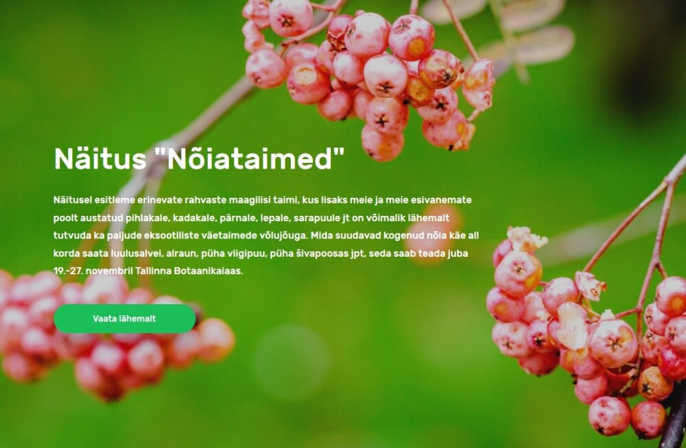 """Tallinna botaanikaaia näitusel tutvustatakse müstilisi """"nõiataimi"""""""
