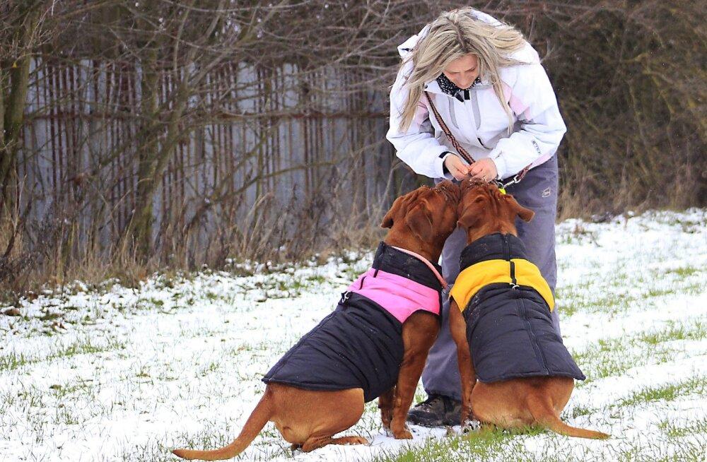 Ekspert annab nõu: mida teha koeraga siis, kui õues on külm ja libe?
