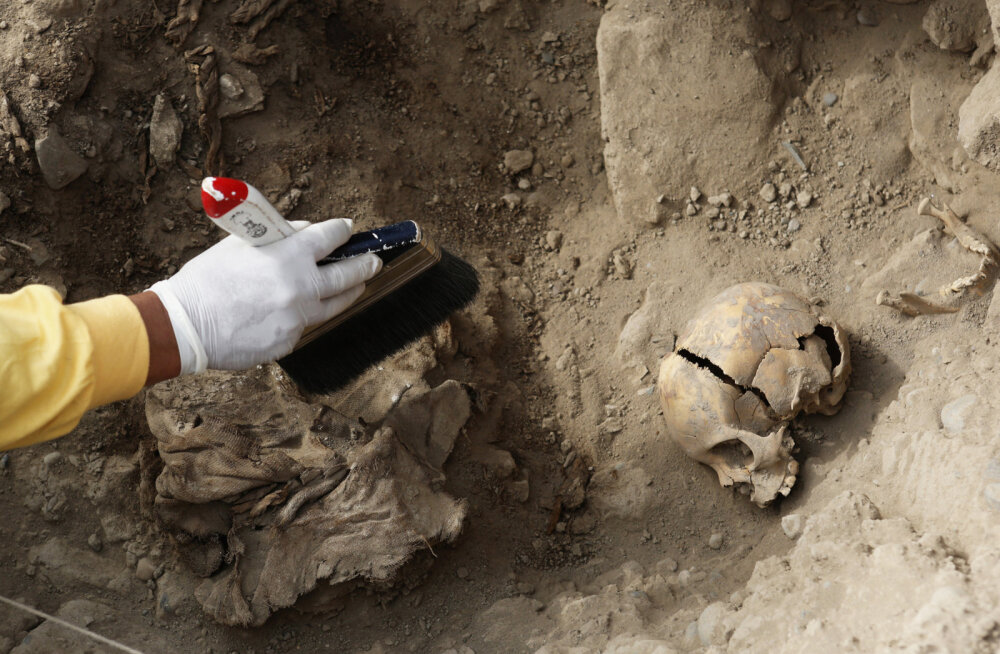 В Перу нашли останки 227 детей, принесенных в жертву более 500 лет назад. Это крупнейшее подобное захоронение