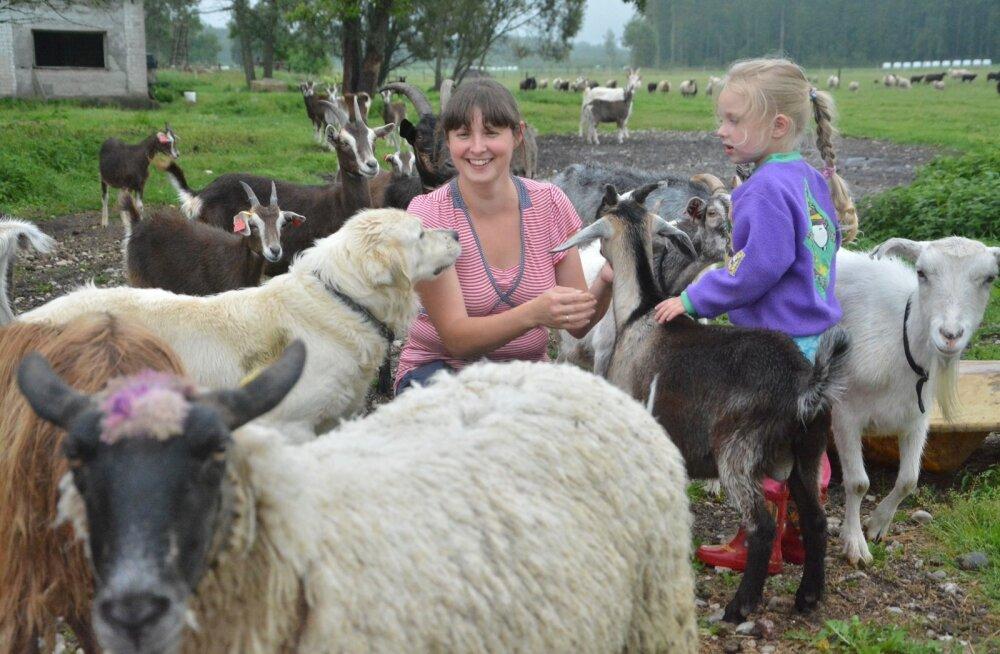 Hiiumaal Lepaniidi talus lambaid ja kitsi kasvatav Kaire Vannas avab talu uksed suvel teist korda. Selgitusi on valmis tulijatele jagama ka peretütar Elisabeth, kes taluelu keskel sirgununa ei pelga ühtki sarvilist ega sõralist.