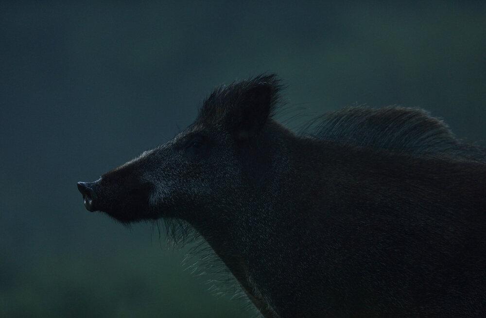 """Suure Hundi tiitli võitis Erik Mandre fotoga """"Punkar öötunnil"""""""