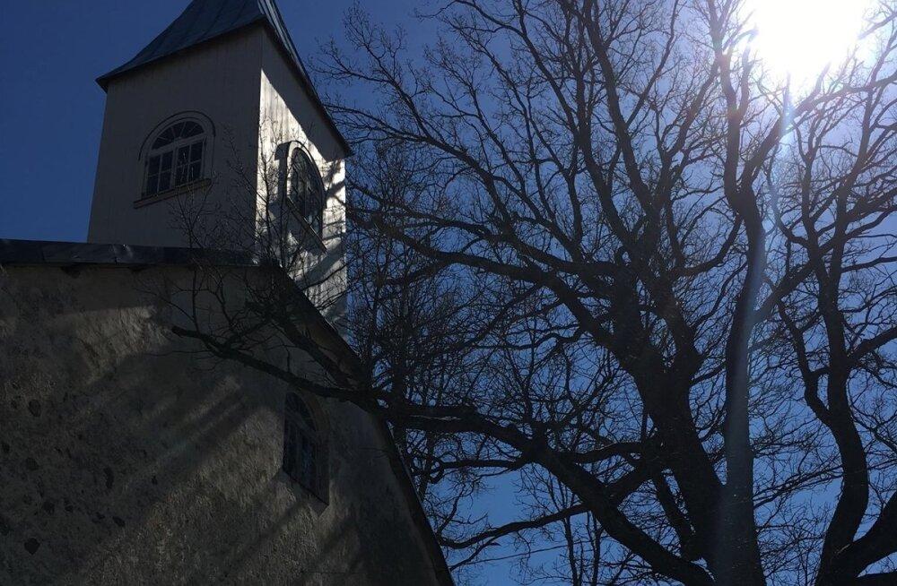 Vara kirik ja põline tamm kõrvuti.