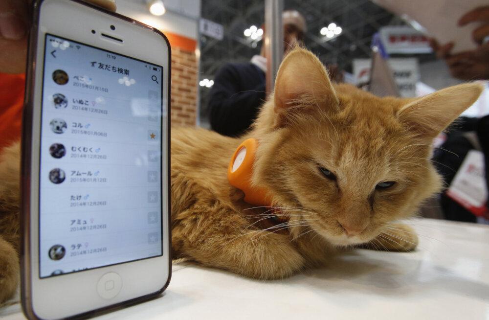Hiina kassi-ja koeraomanikud on lemmikloomade tehnoloogiavidinate järele hullud