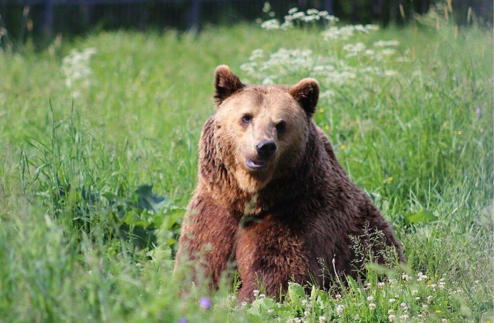 Alaveski loomapargi loomad, juuni 2019