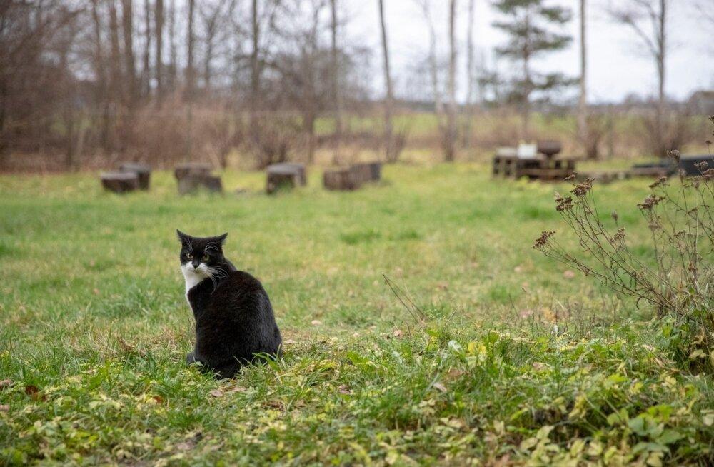 Путешествие с котом: как пережить путешествие на самолете с домашним питомцем