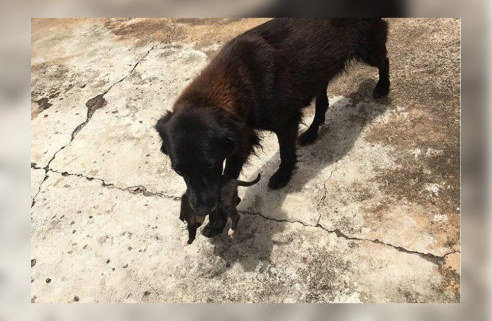 Südamlik lugu: koer soris prügikastis ja leidis sealt äkitselt midagi ootamatut