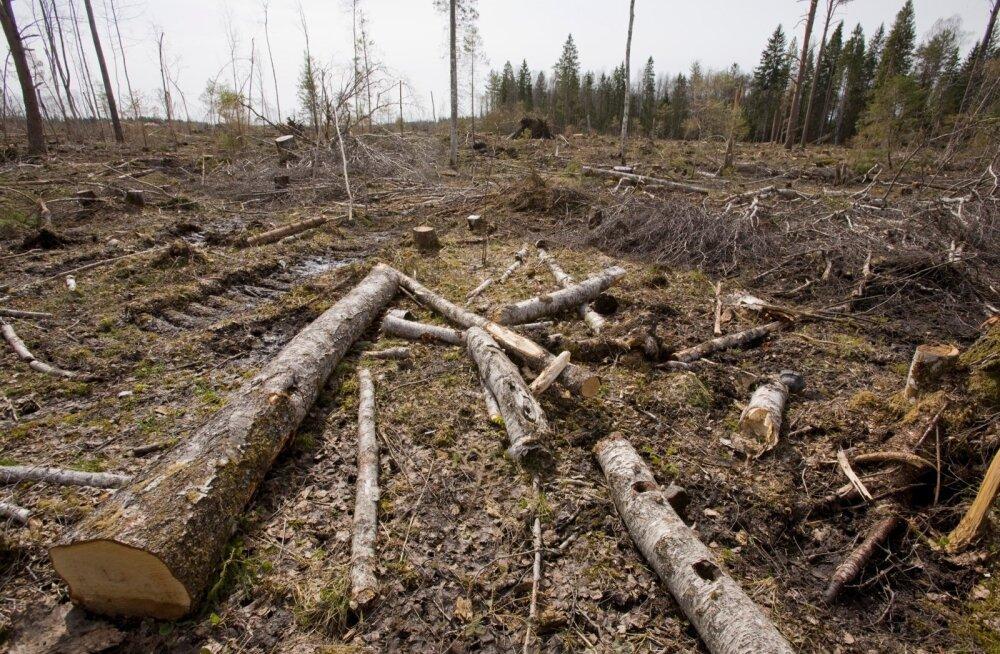 Keskkonnaminister: lageraie maht on kasvanud, aga sanitaarraie maht vähenenud