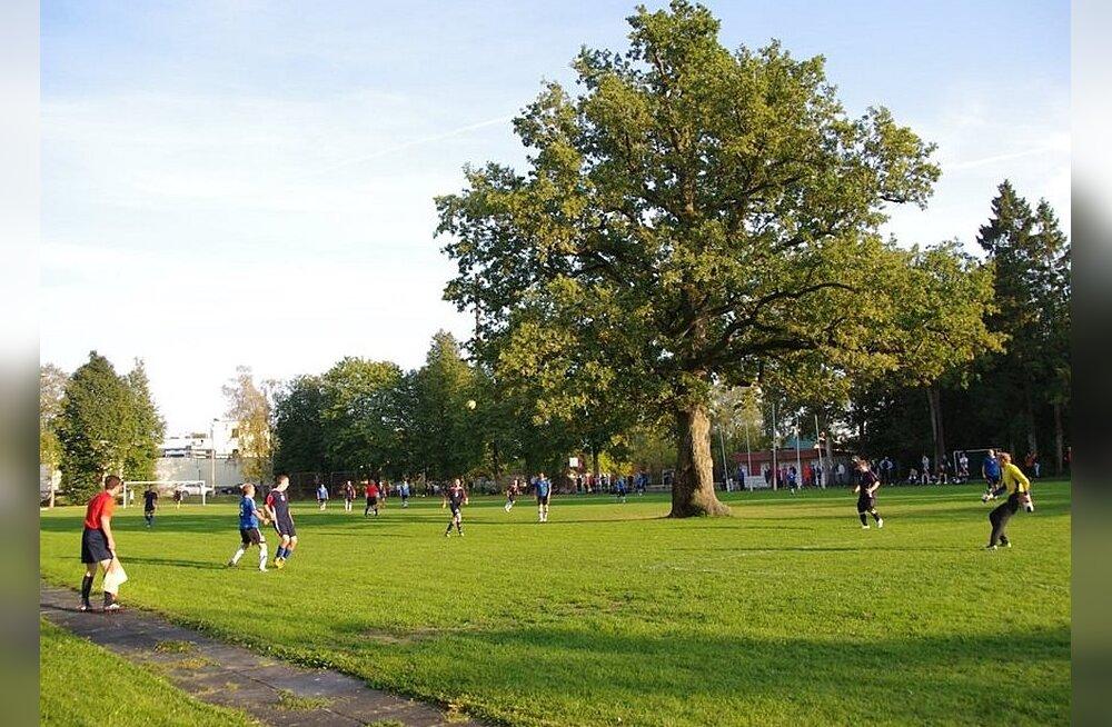 Euroopa aasta puu on selgunud - Orissaare tamm võitis!