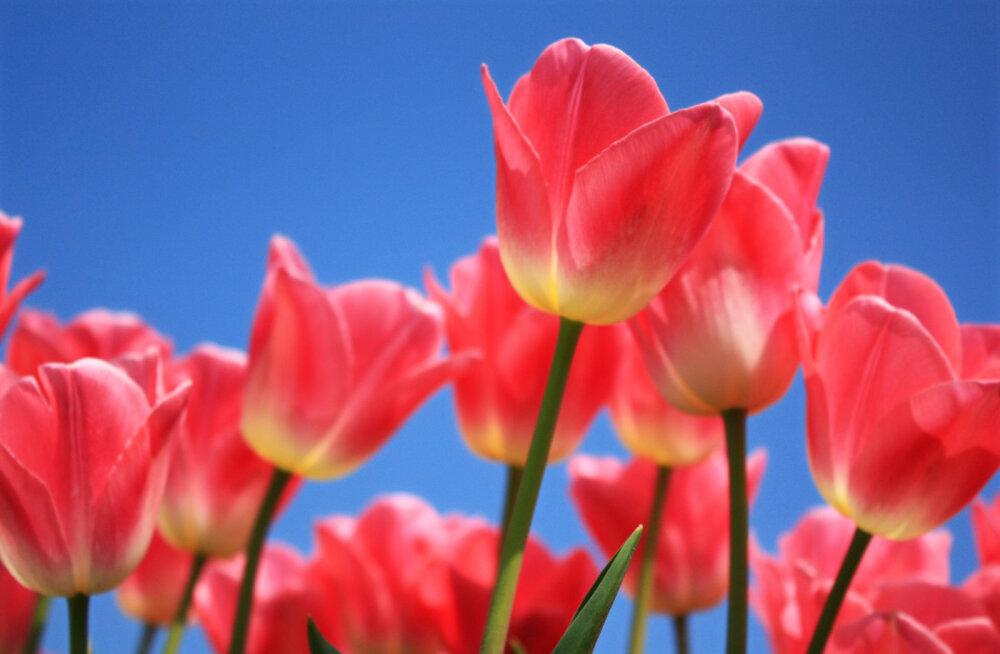 Naisteka horoskoop: kas kevade algus toob armastust või ajab kõik hoopiski pöördumatult tülli?