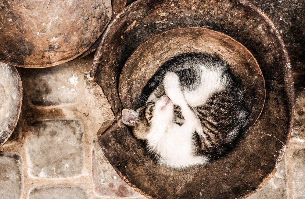Armsad FOTOD: Kassid on võimelised magama täpselt seal, kus uni parasjagu silma tikub