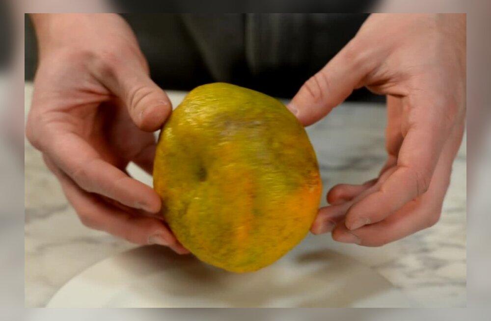VIDEOTEST: Kas see inetu uudisvili kauplustes näeb seest sama kole välja kui väljast?