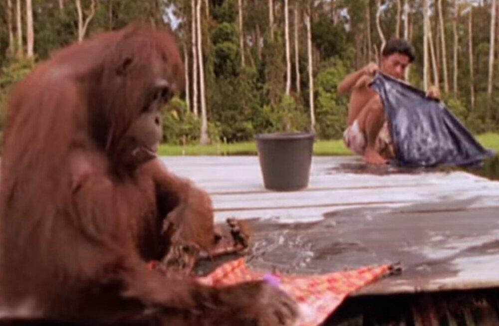 ВИДЕО | Эволюция уже здесь! Смотри, что вытворяют эти животные!