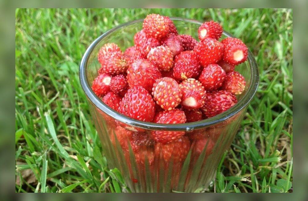 Metsmaasikad1