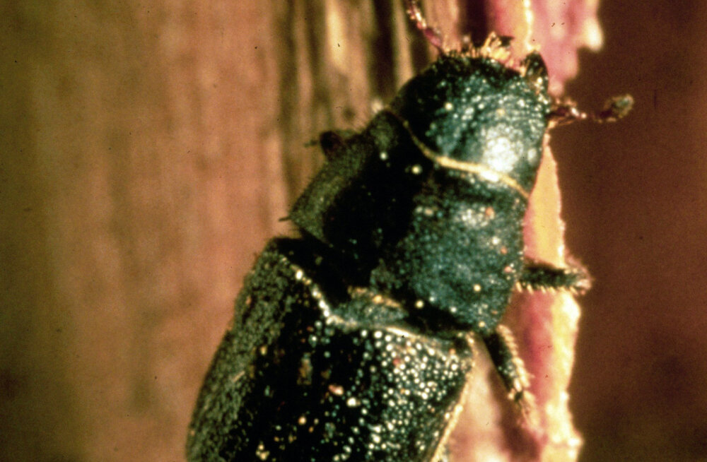 Uus superantibiootikumide allikas: putukad