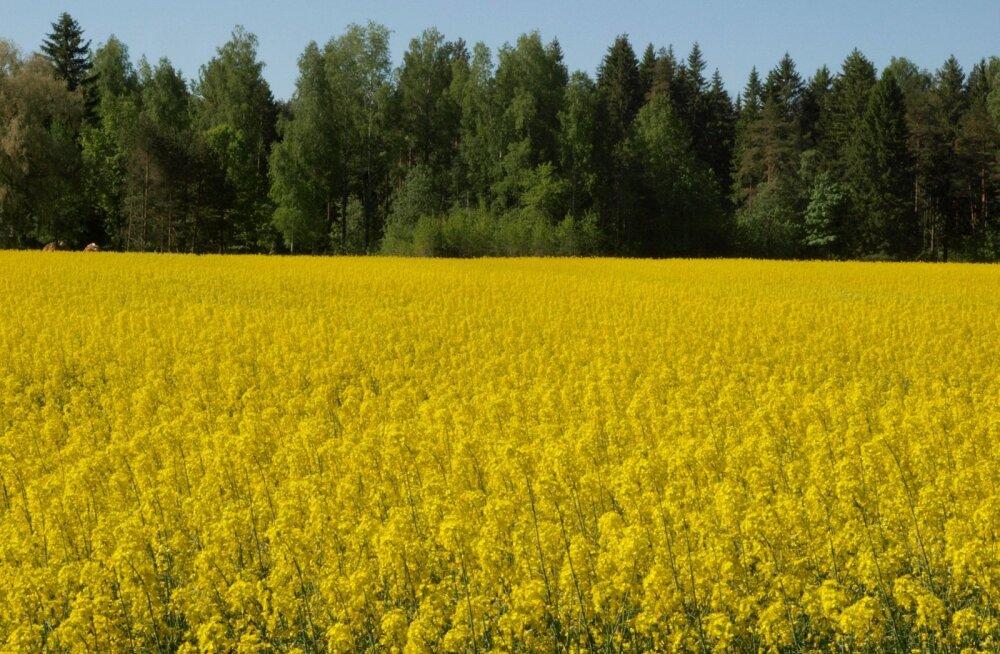 Selleks et põlluviljad rikkalikult õitseks ja palju saaki annaks, tuleb nende eest hoolitseda kohe võrsumisest peale.