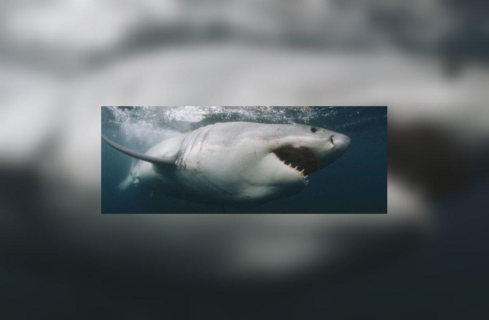 Hai kütib ohvrit samamoodi nagu sarimõrvar