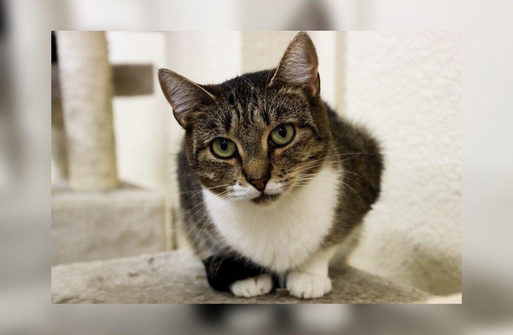 Väärkoheldud Melissa lugu | Pesaleidja saatis koju juba 4000. kassi