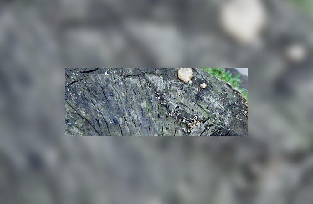 (:)kivisildnik: Ajupehmenemine ja väärtused