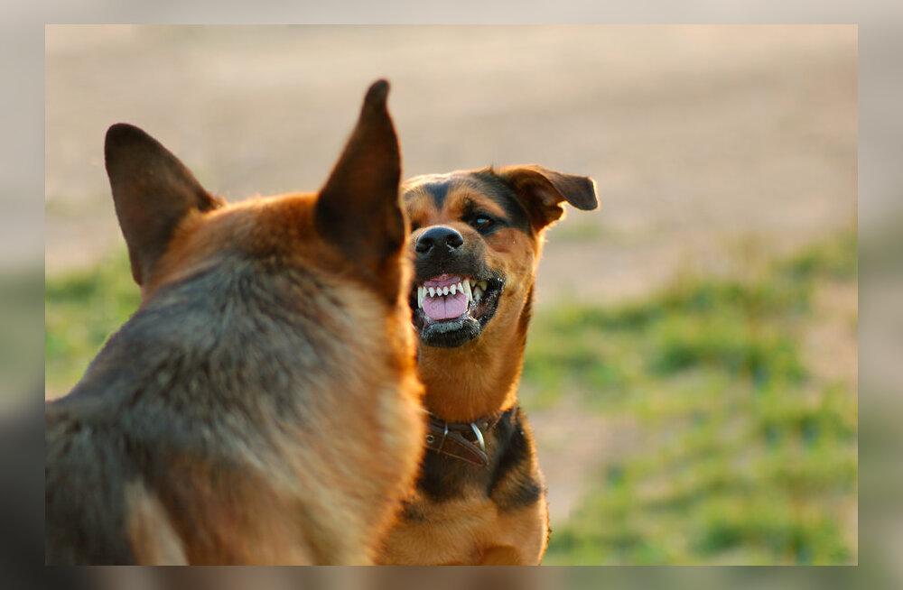 Достать член у пса