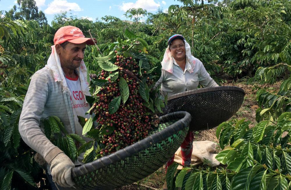 Kes võidavad ja kaotavad kohvi hinna kukkumisest 13 aasta madalamale tasemele?