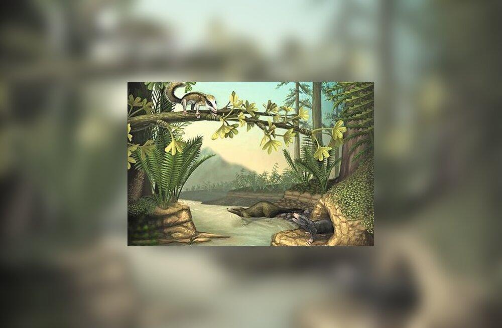 Hea teada – sellised olid vanimad teadaolevad puu otsas ja maa all elanud imetajad
