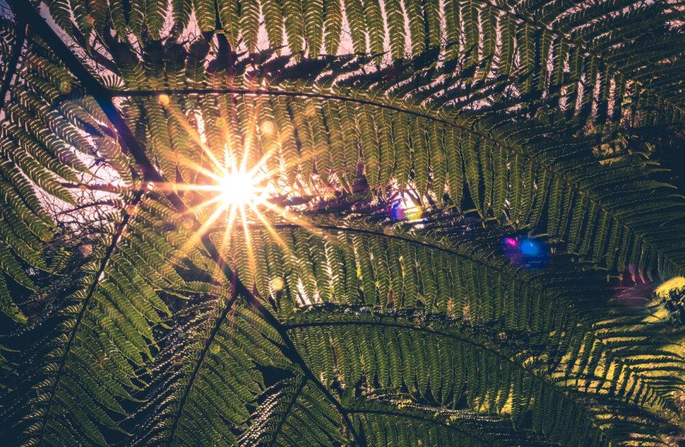 MAAGILINE PÄEV! Täna, 21. juunil on suvine pööripäev koos päikesevarjutusega ja noore Kuu loomisega Vähi sodiaagimärgis