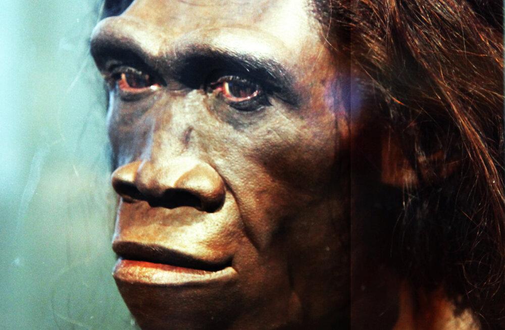 Teadlased: iidne inimliik Homo erectus suri välja, kuna oli liiga laisk