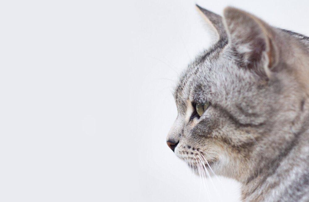 Arvad, et kassi võtmine on lihtne? Vaata, mida pead teadma enne, kui sulle mõnest turvakodust kass loovutatakse