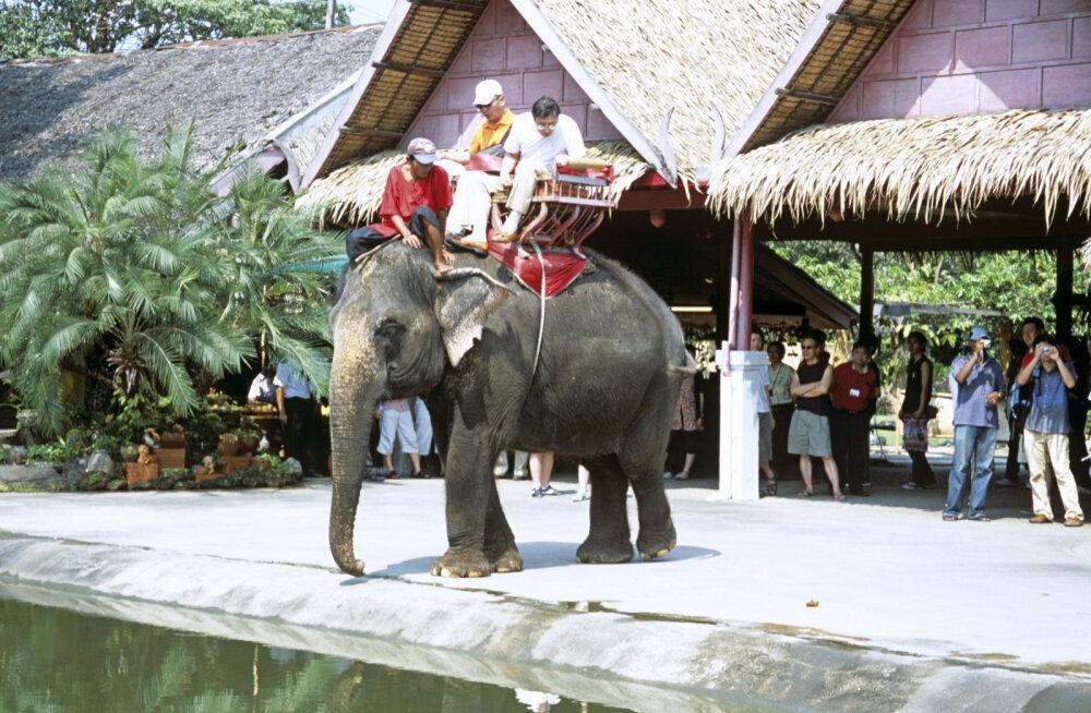 Туристы до смерти заездили слона на экскурсии