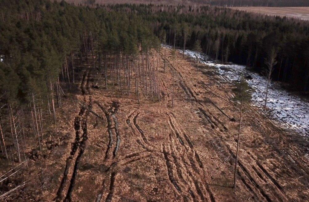 Metsaostuks annetusi kogunud kogukond sai raha osaliselt kokku