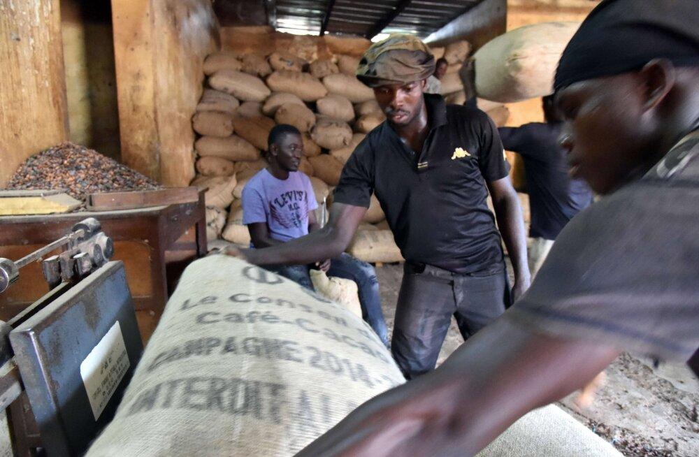 Kakao on parim: šokolaadi alusaine hinnatõus lööb teisi toormeid pika puuga