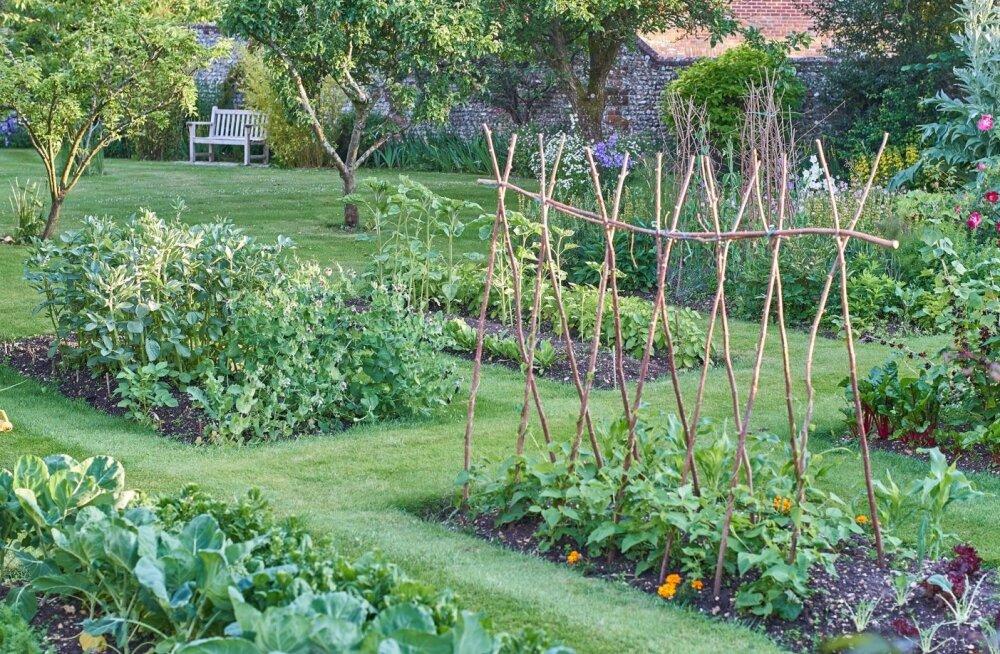 Korrektselt rajatud peenrad ja hästi planeeritud viljavaheldus aitab paljusid probleeme ennetada.