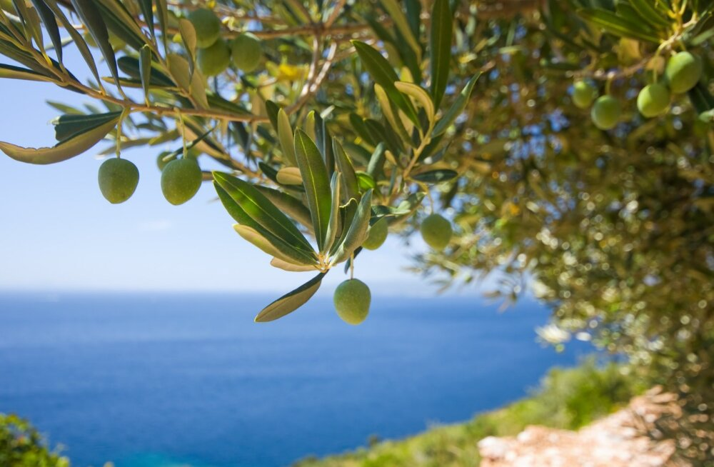 Горько! Что оливка, то и маслина