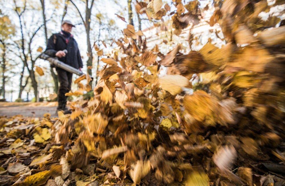 Lehtede koristamine Tartus Emajõe-äärses pargis käib lehepuhurite ehk õhuluudadega