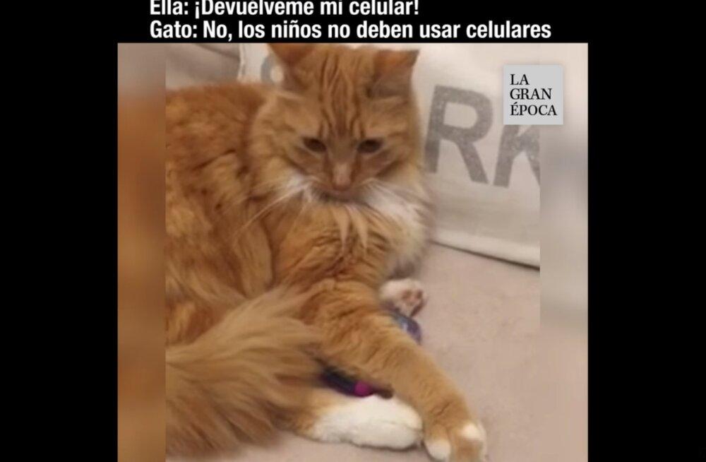VIDEO | Tüli majas! Kass keeldub lapsele mängutelefoni tagastamast