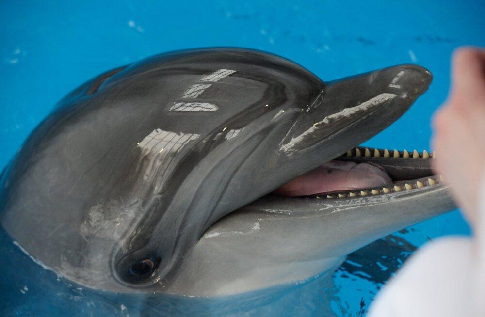 Ukraina ametnik: meie sõjadelfiinid surid venelaste käes näljastreigi läbi kangelassurma