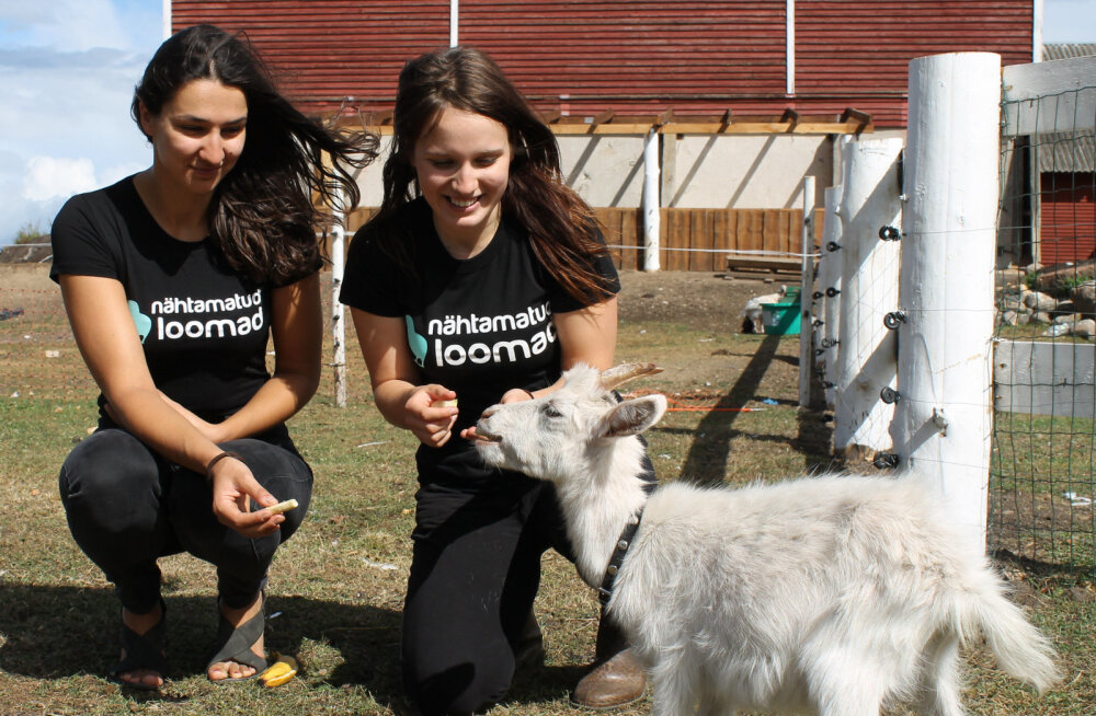 Nähtamatud Loomad valiti maailma tõhusaimate loomakaitseorganisatsioonide hulka
