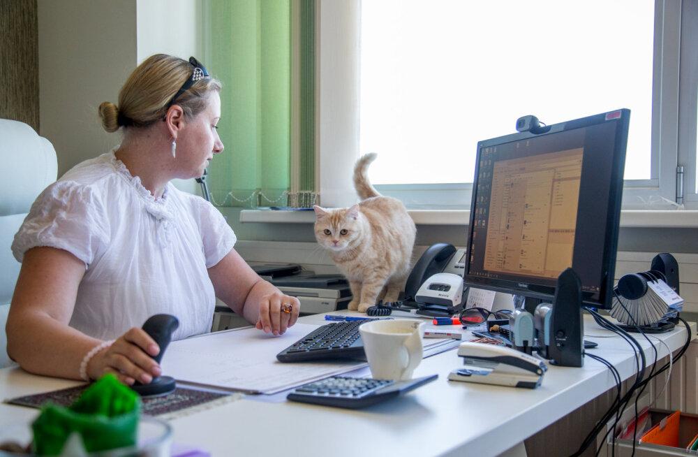 Kass Virsiku lugu: tööl võib ka peitust mängida
