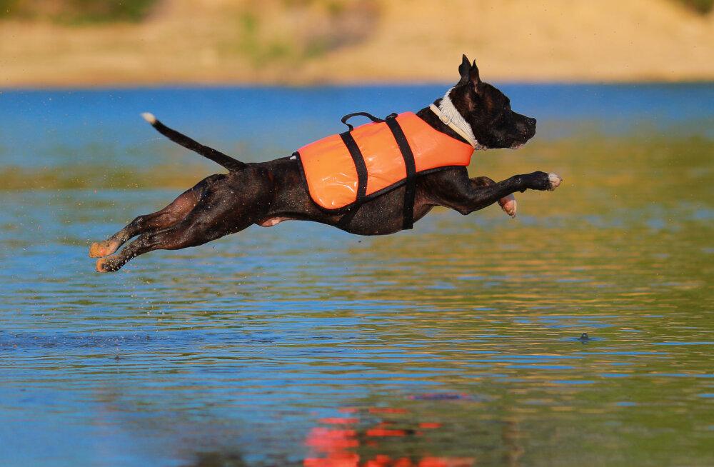 Enneta õnnetusi | päästevest võib päästa sinu koera