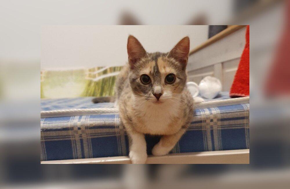 Cinnamoni lugu   Metsikust kassipojast on saanud mänglev karvapall, kes loodab, et igaühe jaoks on kuskil keegi