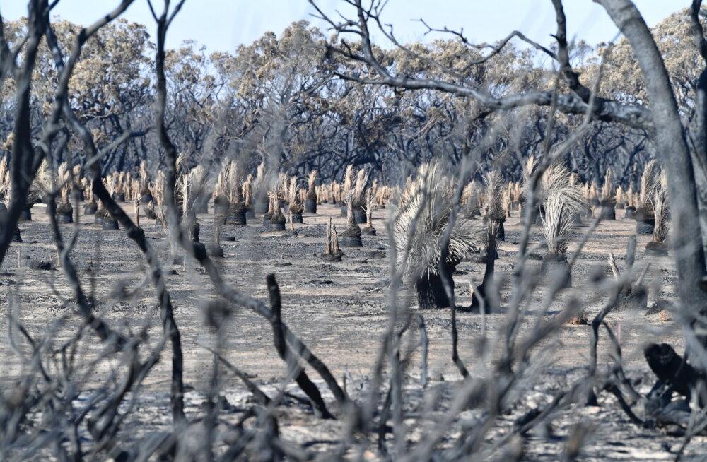 Austraalia põlengute häving ulatub turismisektorist kaugemale