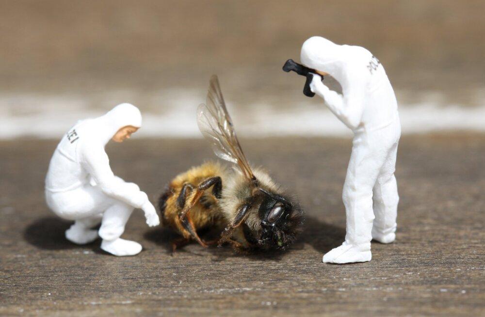 Loe, mis asjaoludel mesilased tänavu Eestis hukkusid