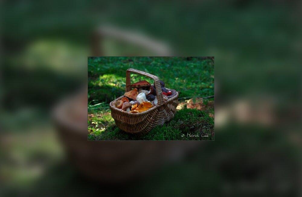 Seeneaeg — korjele ja hoidistama